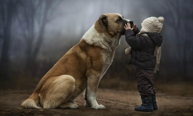 Prepare-se para ficar abalado quando descobrir o que seu cão pensa sobre você